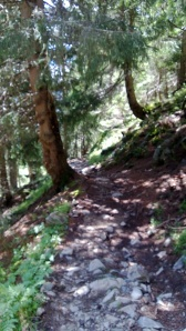 "This is a little blurry, but it's the trail from La Flegere to Chamonix.  I'll be running this again Sunday morning.  Unfortunately it was more rocky and rooty than I had hoped it would be.  And kind of steep.  ""Running"" may mean walking."
